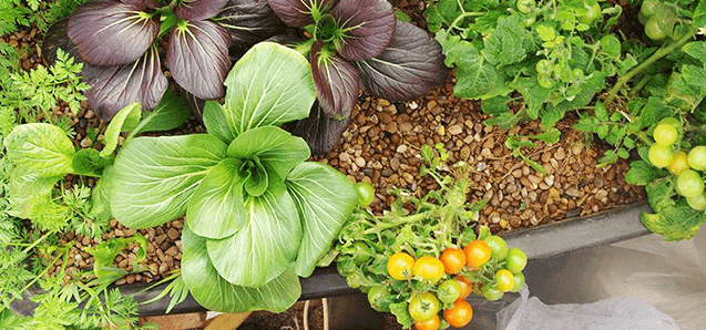 Provide your plants with a start-up boost of nutrients.