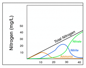 Typical Nitrogen Cycle3